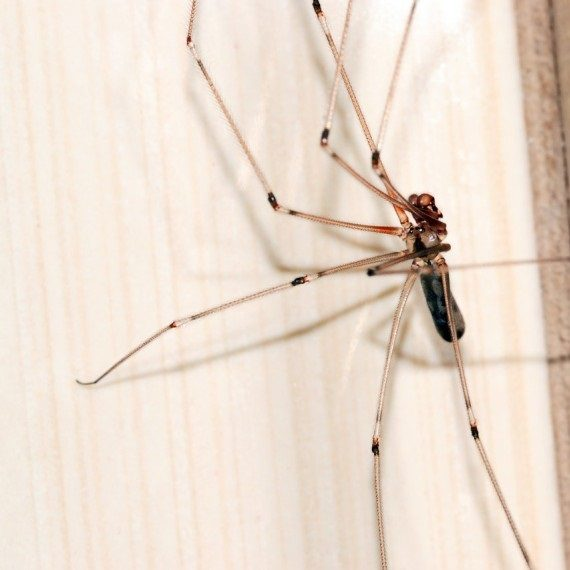 Spiders, Pest Control in Garston, Leavesden, WD25. Call Now! 020 8166 9746